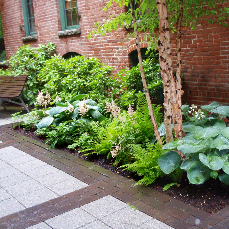 Harding Botanicals. Exterior Design. Shade Garden