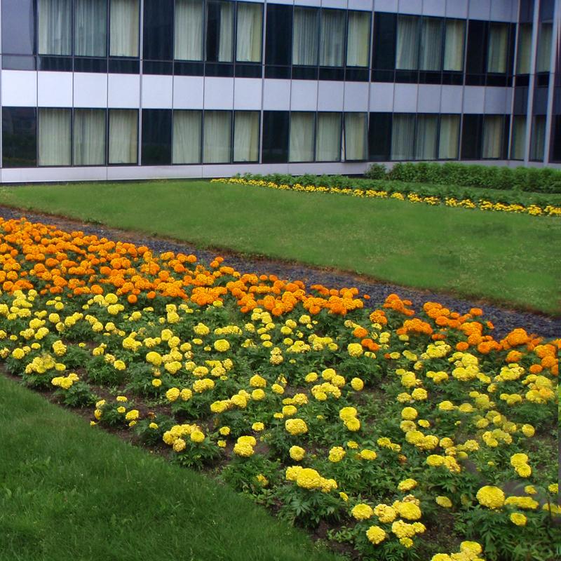 Harding Botanicals. Roof Garden. Exterior Design