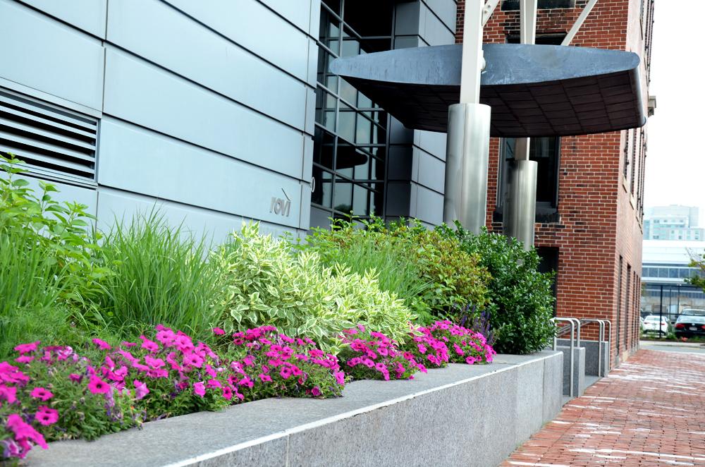 Exterior. Landscaping. Boston Exterior. Harding Botanicals