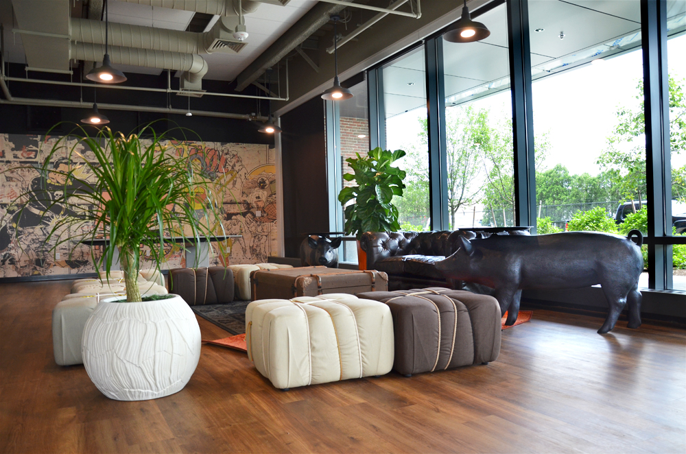 Ponytail Palm. Harding Botanicals. TripAdvisor Headquarters