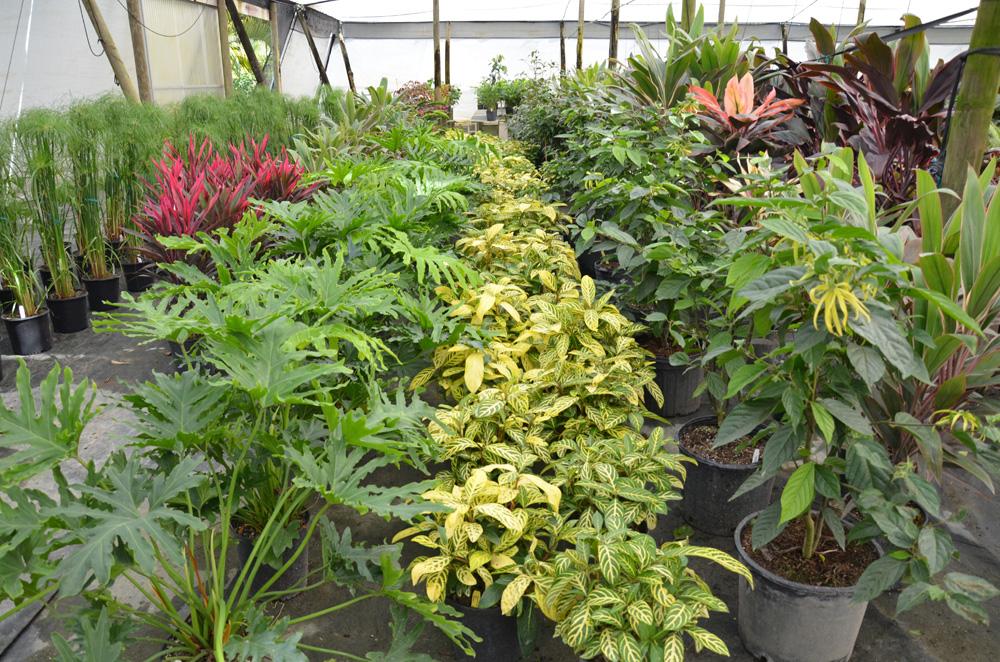 Plant Nursery Blog From An Interior