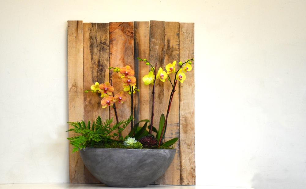 Harding Botanicals. New Balance. Orchid Bowl