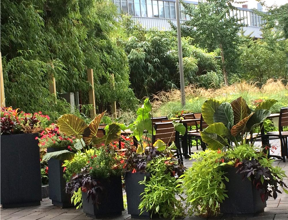Exterior. Container Gardens. Harding Botanicals. Townsmen
