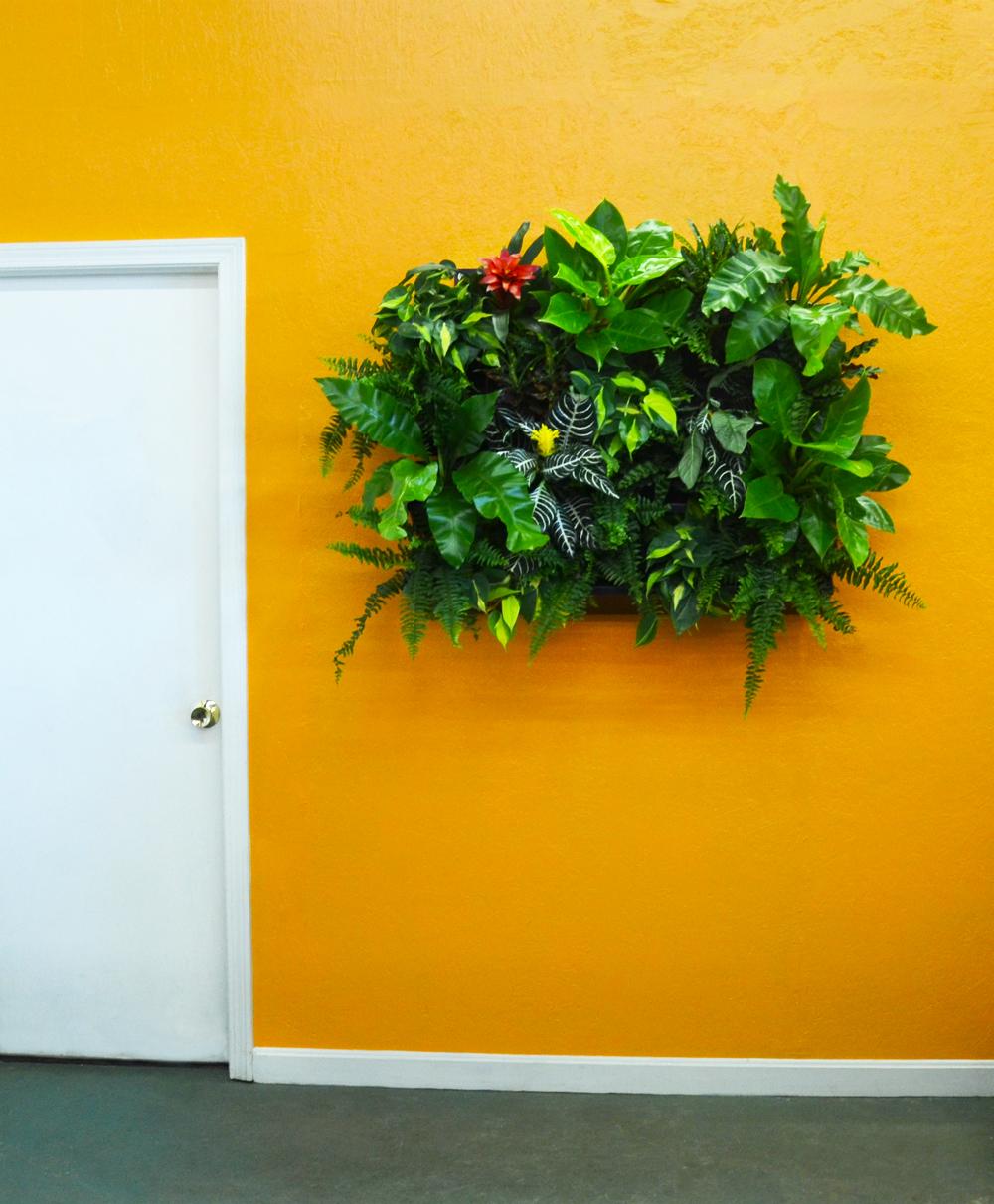 Harding Botanicals. Green Wall