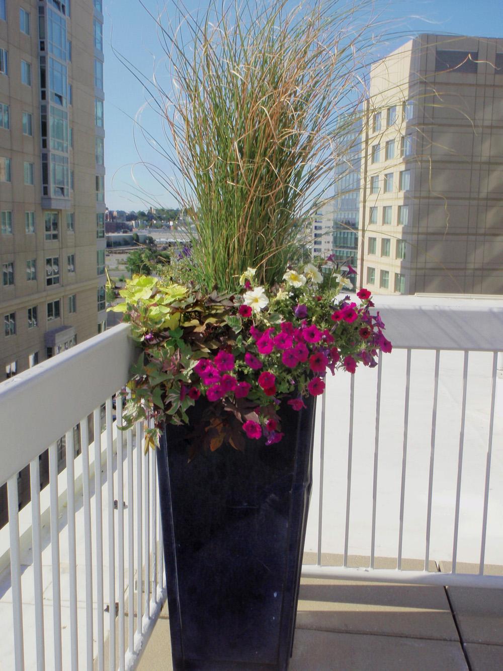 Harding Botanicals_Exterior Design_Container Gardens 4