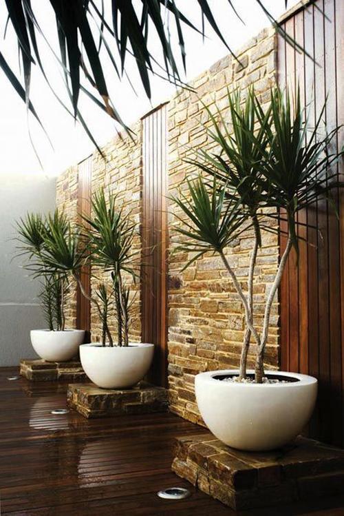 Harding Botanicals_Interior Plant trends