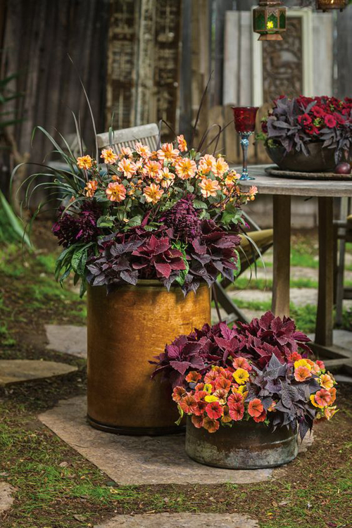 Harding Botanicals_Fall Container Gardens