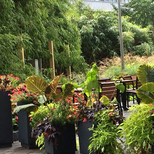 Harding Botanicals. Exterior Design. container Gardens. Boston exterior