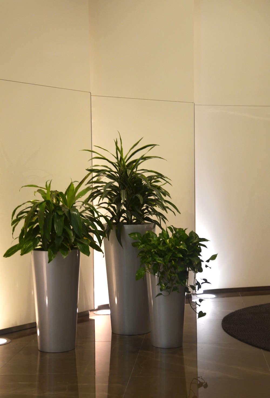 Harding Botanicals. Boston Interior Plants