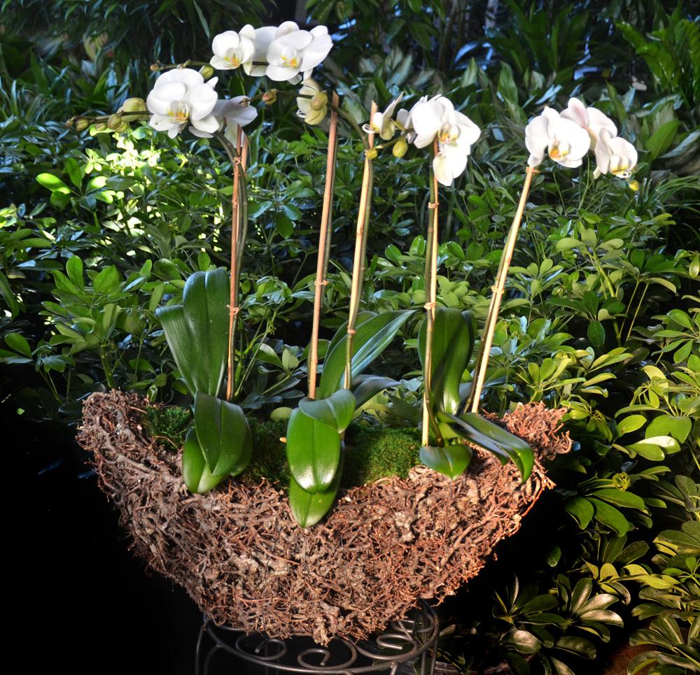 Harding Botanicals Boston Flowers