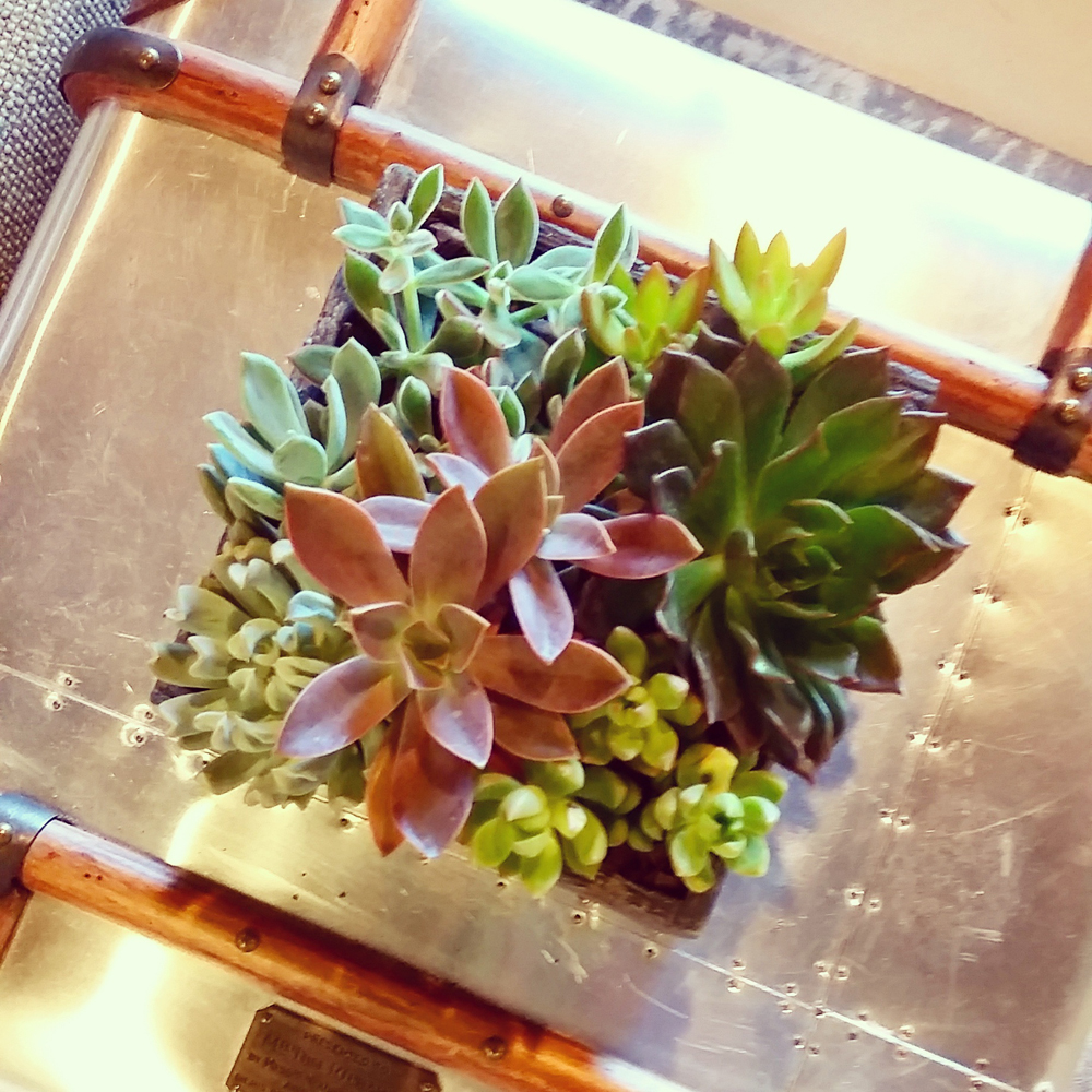 Taking Care Of Your Indoor Succulents Harding Botanicals