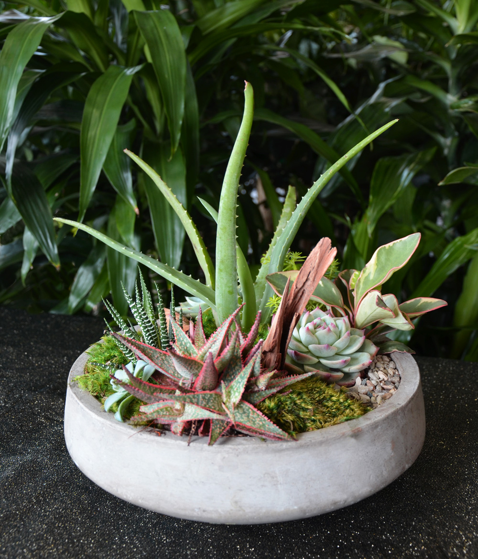 Harding Botanicals_succulent garden care.jpg