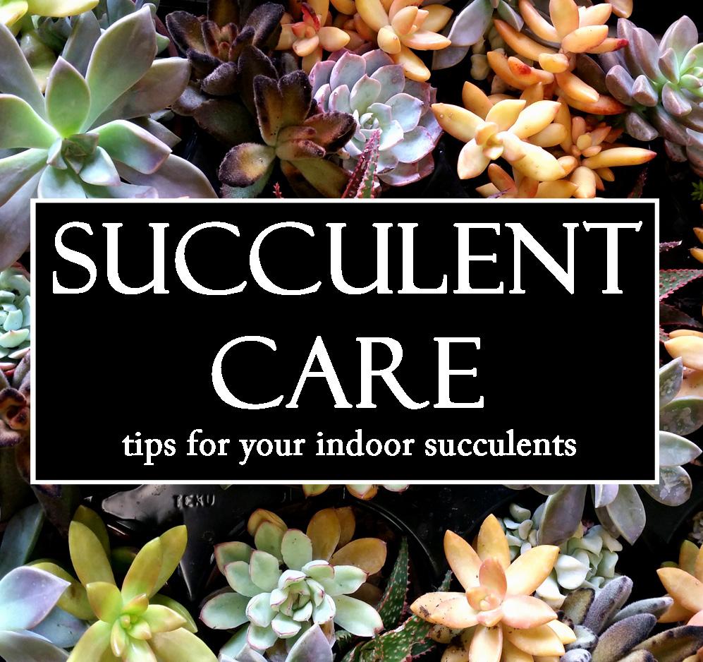 Succulent care.jpg