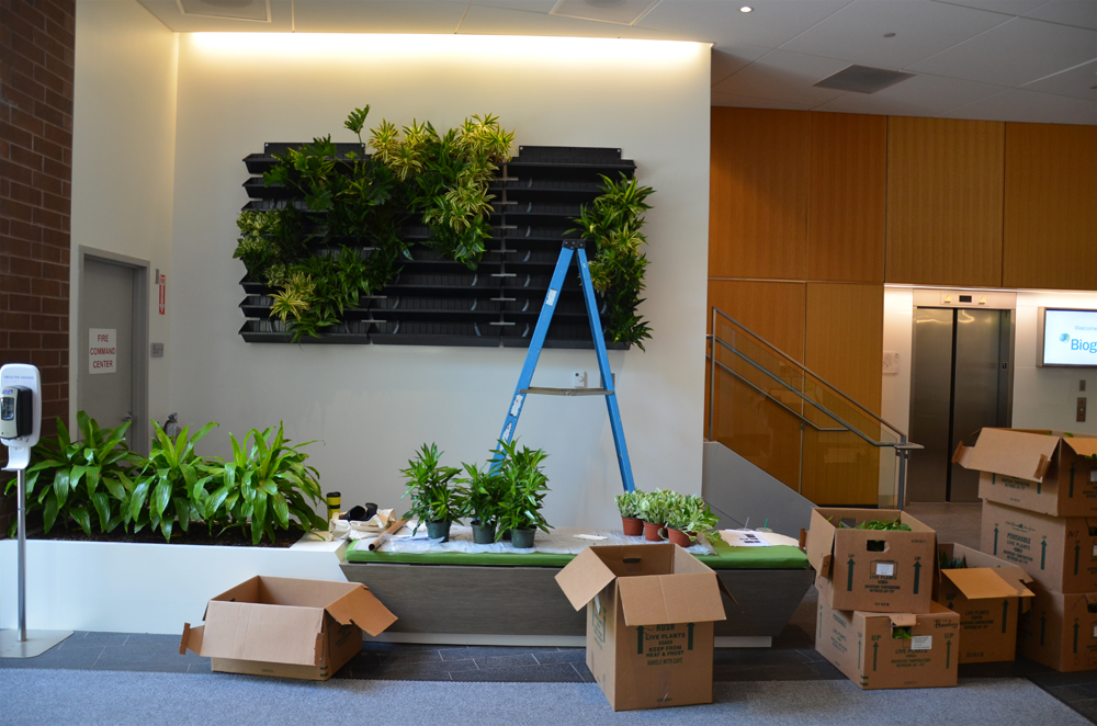 Harding Botanicals_Living wall. green wall 1