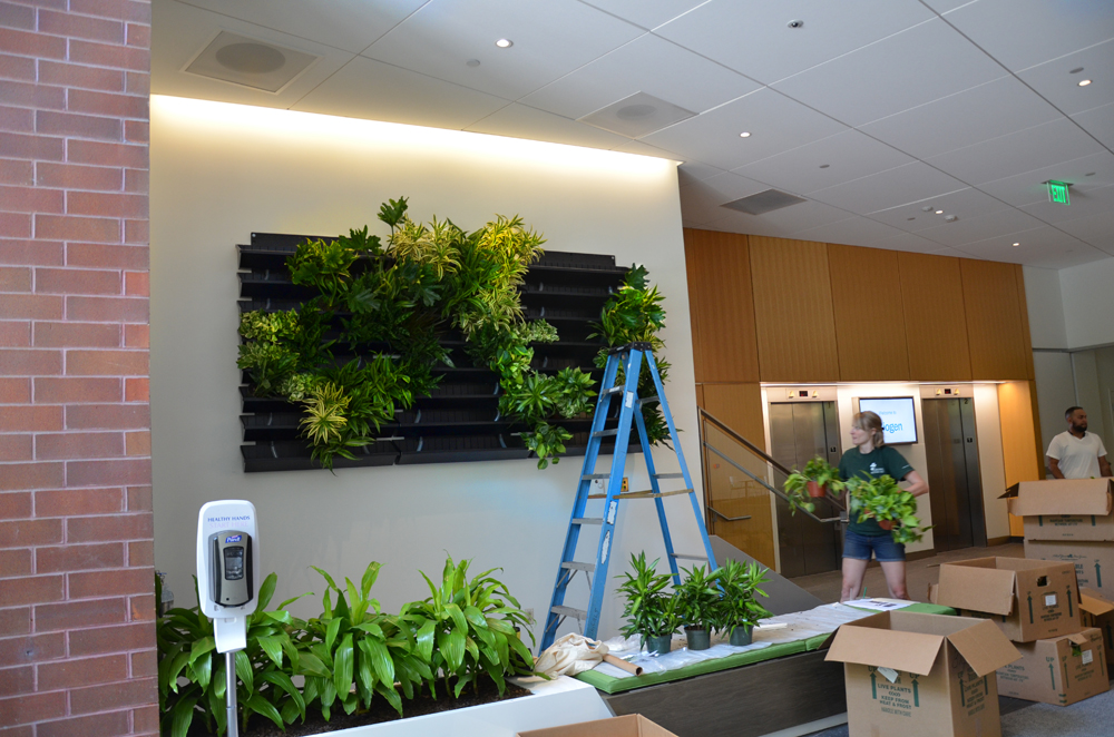 Harding Botanicals_Living wall. green wall 2