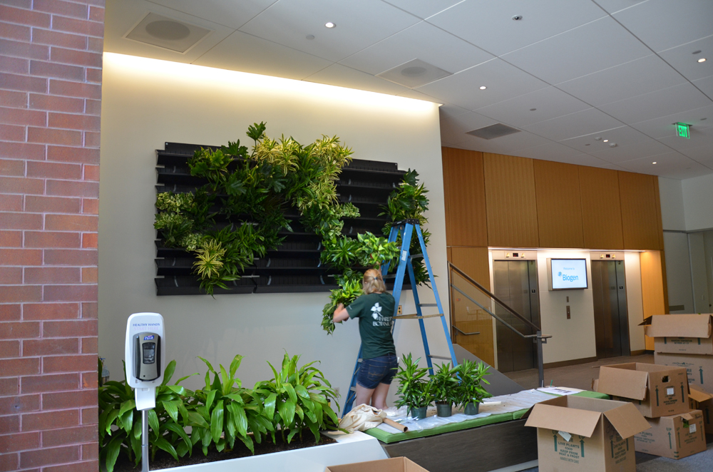 Harding Botanicals_Living wall. green wall 3