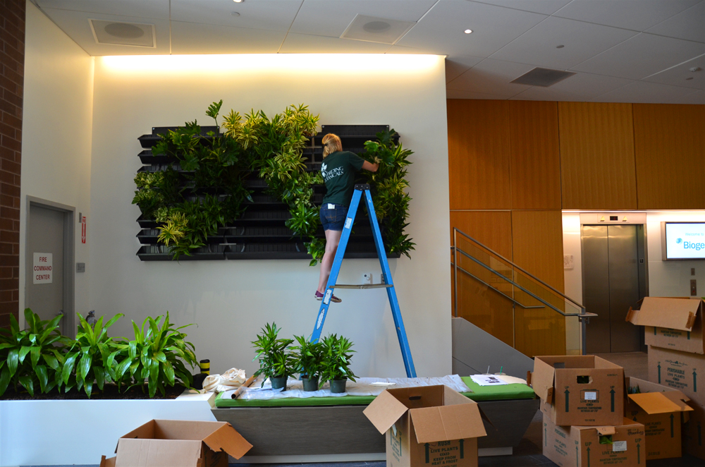 Harding Botanicals_Living wall. green wall 4