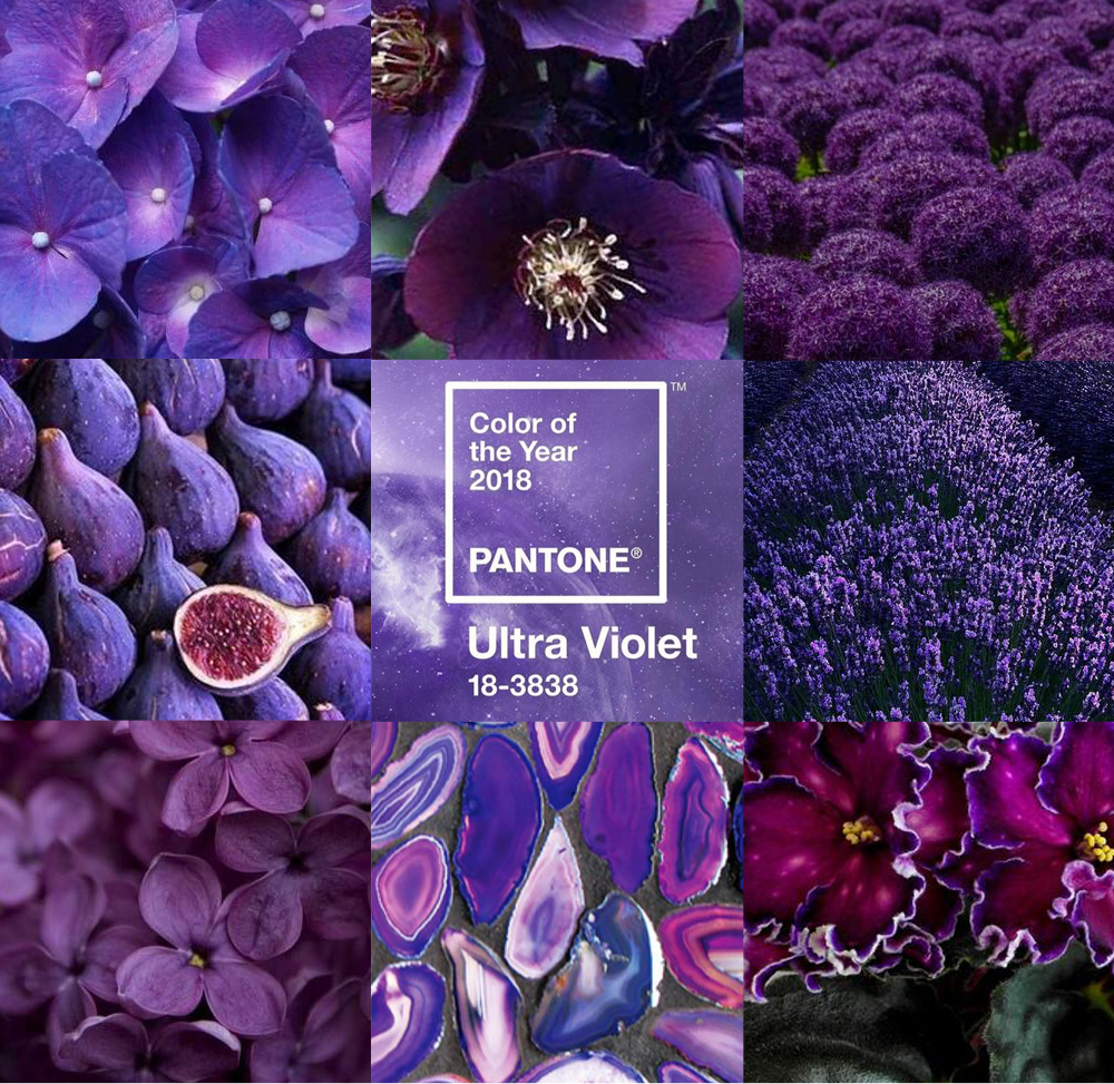 2018 Ultra Violet Pantone_Harding Botanicals