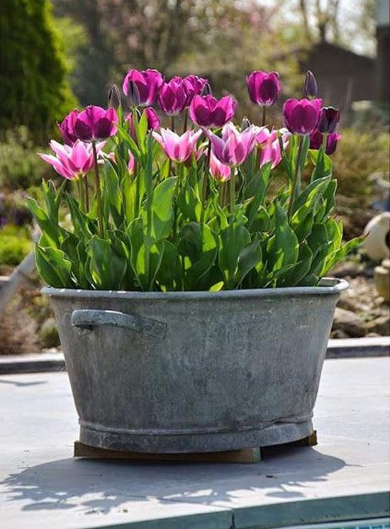 Harding Botanicals_Spring Container Gardens 3.jpg