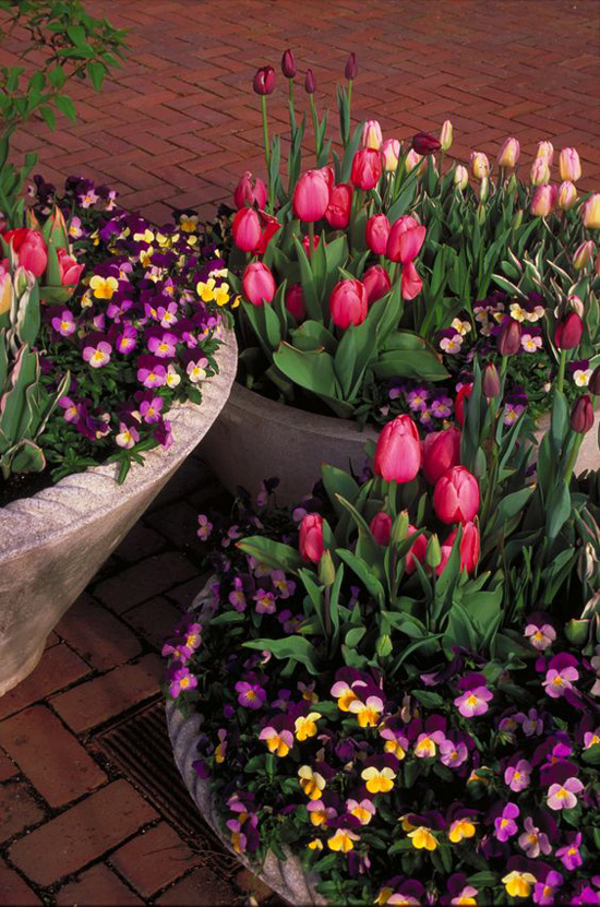 Harding Botanicals_Spring Container Gardens 4.jpg