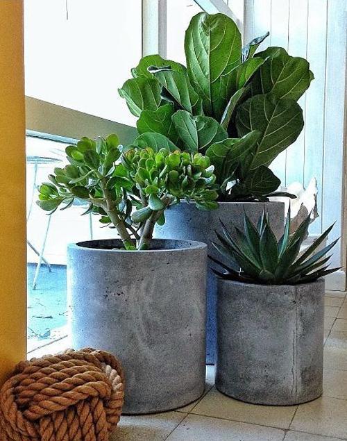 Ficus Lyrata, Jade Plants, Agave