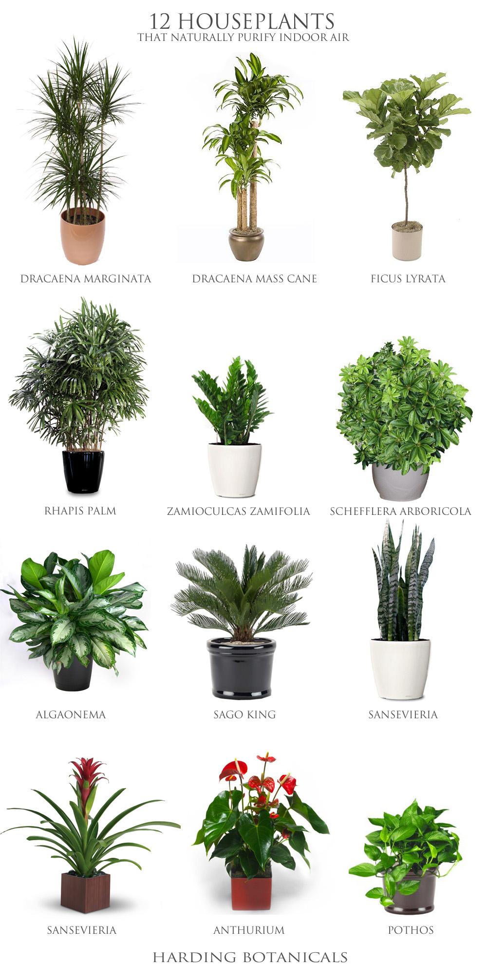 Harding Botanicals_12 house plants.jpg
