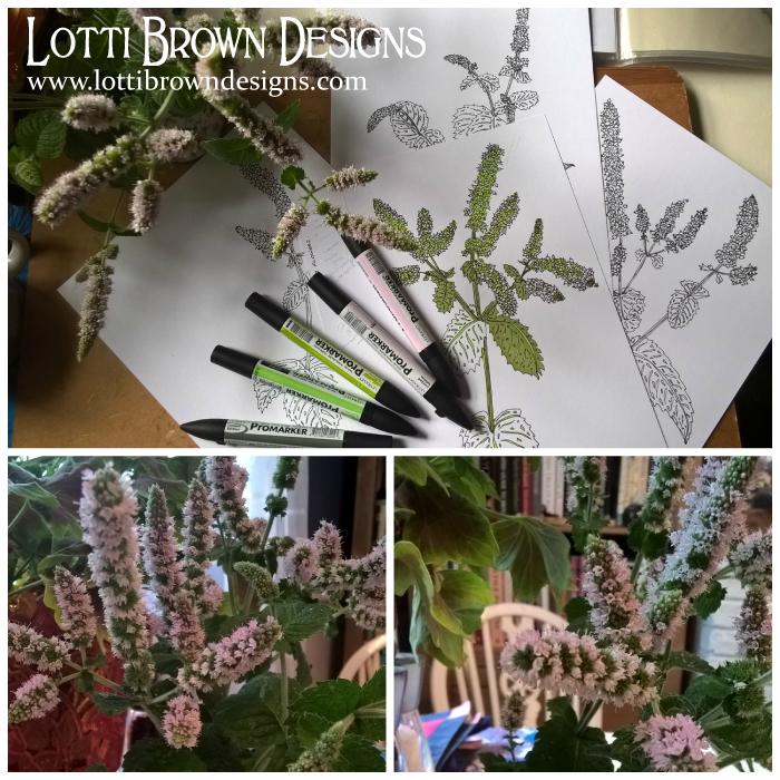 Mint flower drawings