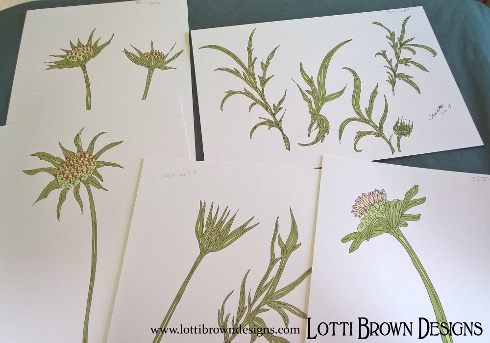 Buds and seedheads make interesting shapes to go with the attractive flowers