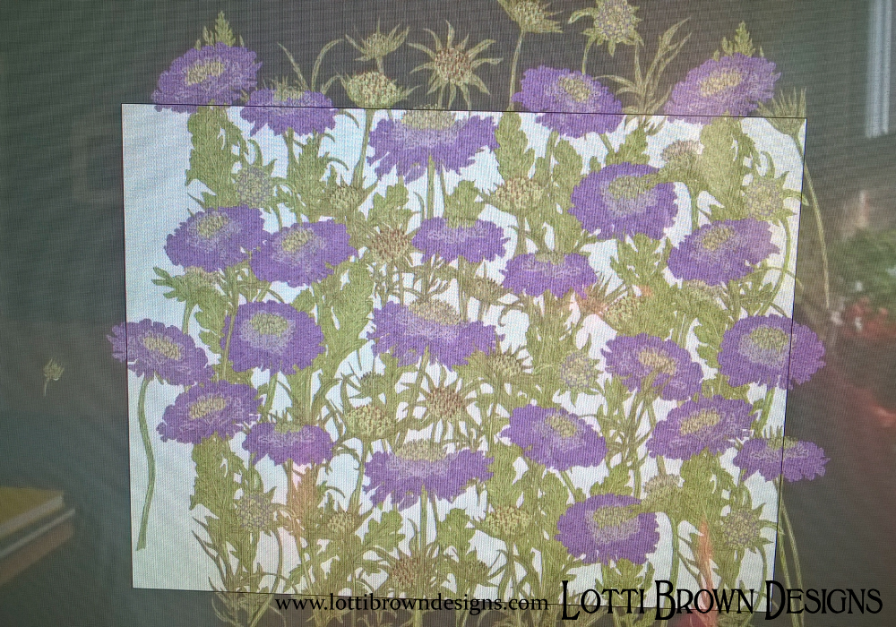 Scabious wildflowers, creating a pattern for the meadow layout
