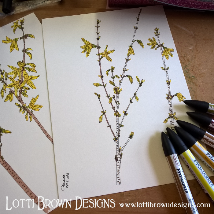 Drawing some forsythia flowers to put with my iris drawings