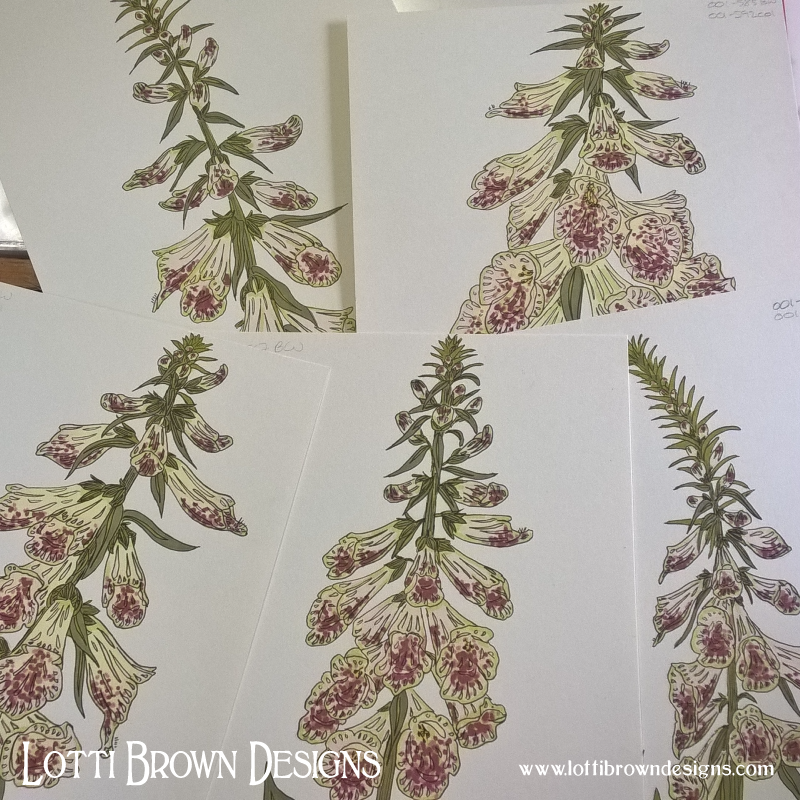 Drawing foxgloves...