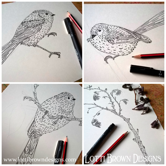 Long-tailed Tits, drawings