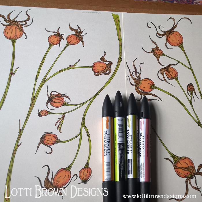 Drawing rosehips for the artwork