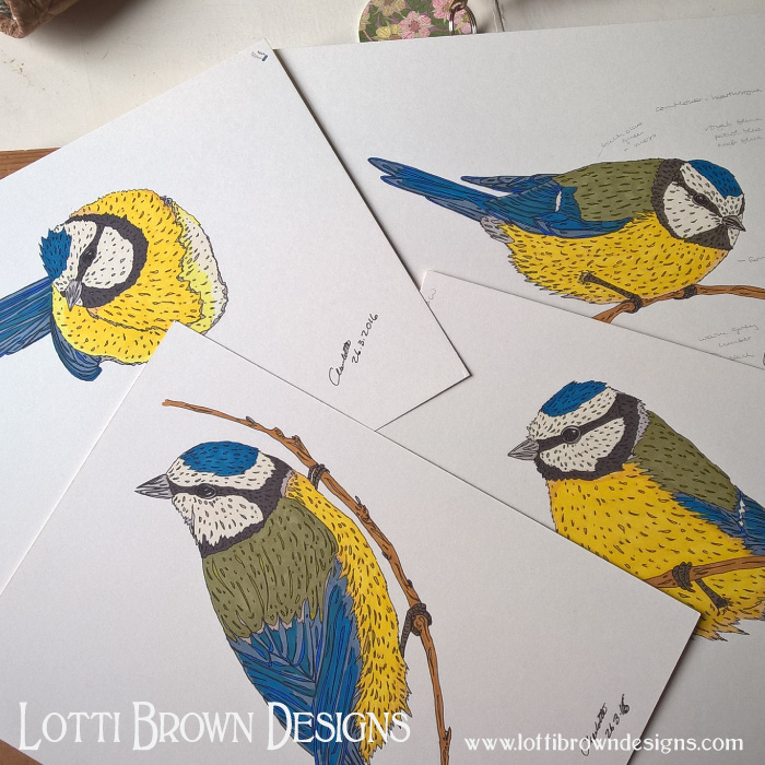 Bluetits drawings, coloured with ink
