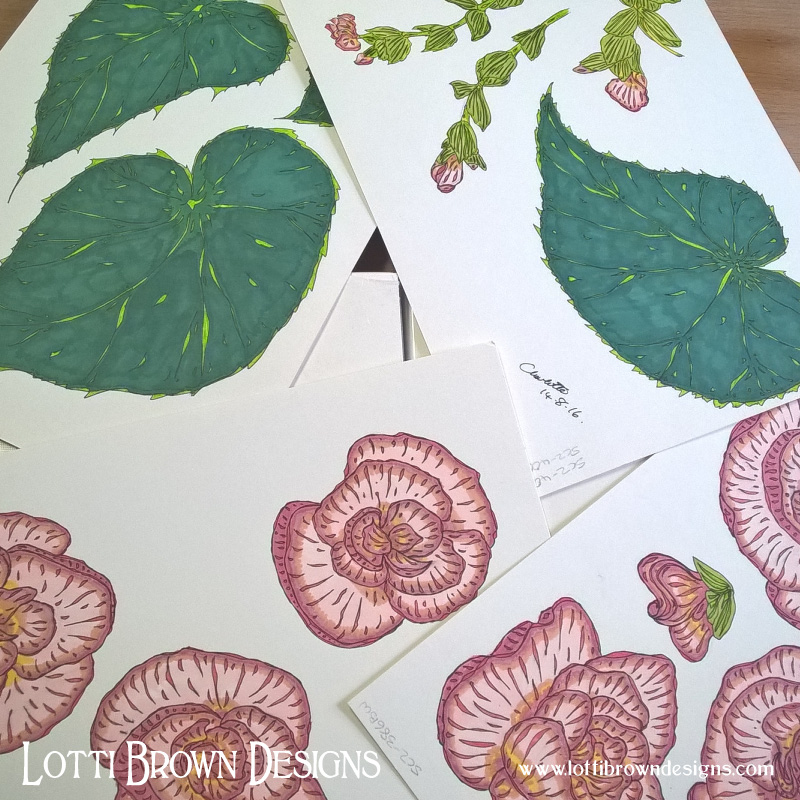 Tropical look from a common houseplant - begonia drawings