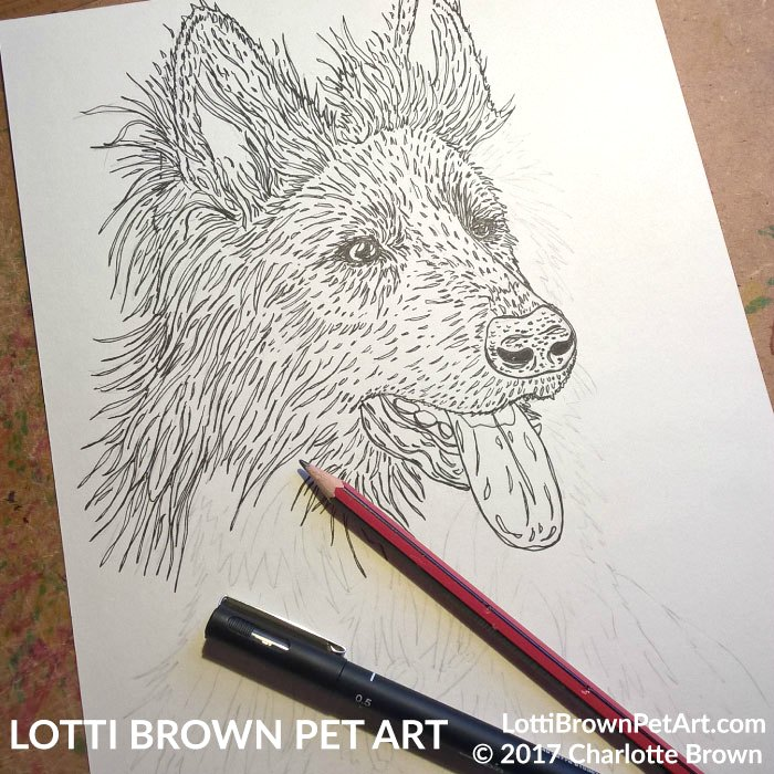 German Shepherd Drawing - click image to see what happened to this drawing