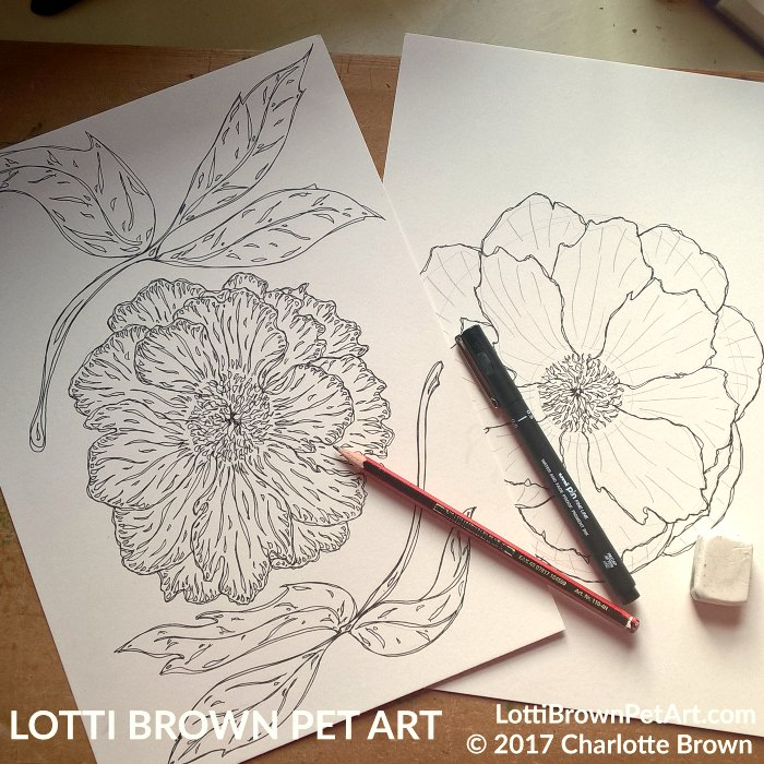 Starting to draw the peonies
