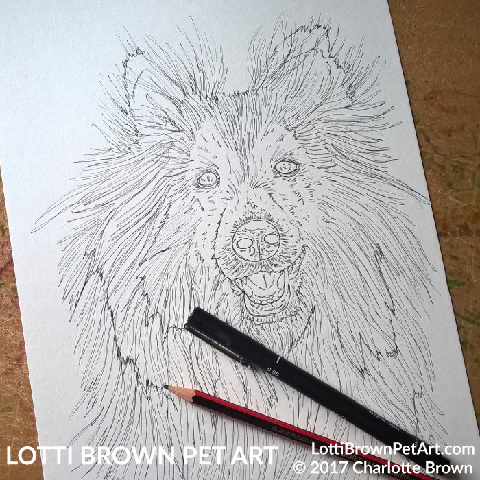 Starting the sheltie drawing
