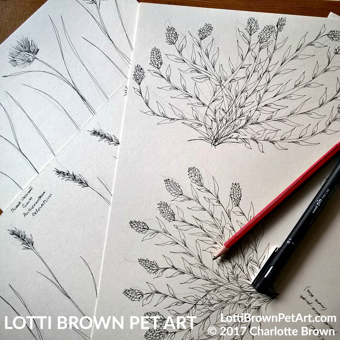Starting to draw flowers and foliage