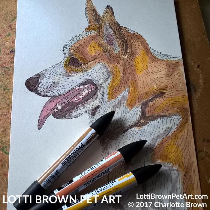 Adding colour to the corgi drawing