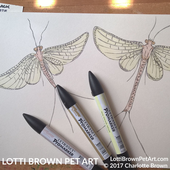 Drawing the 'fairies'