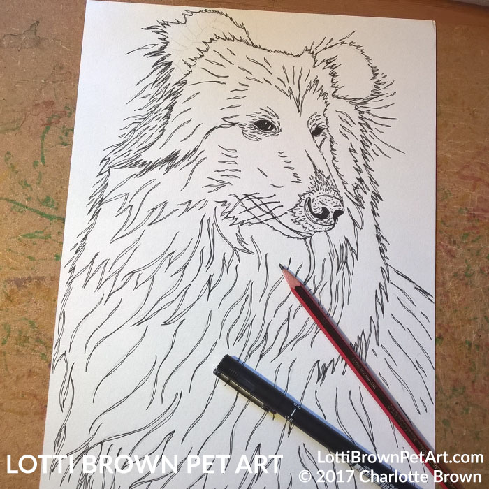 Starting the rough collie drawing