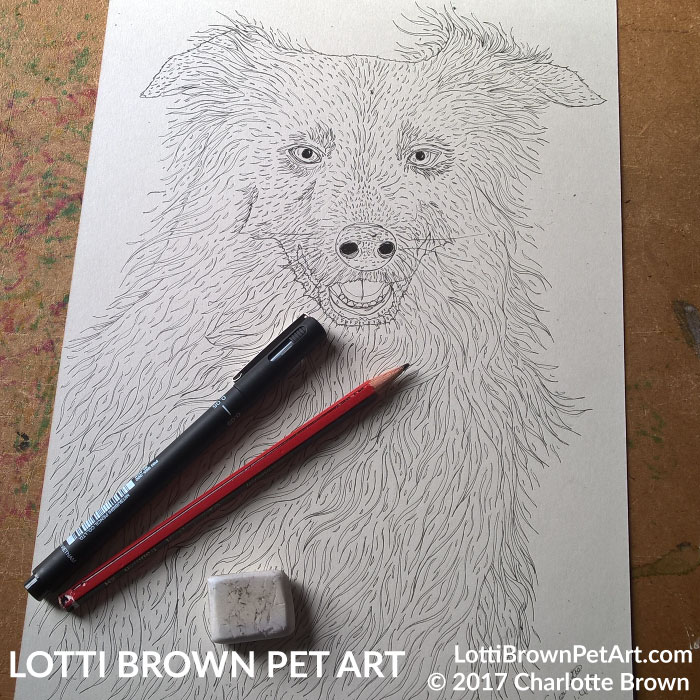 Starting my border collie drawing