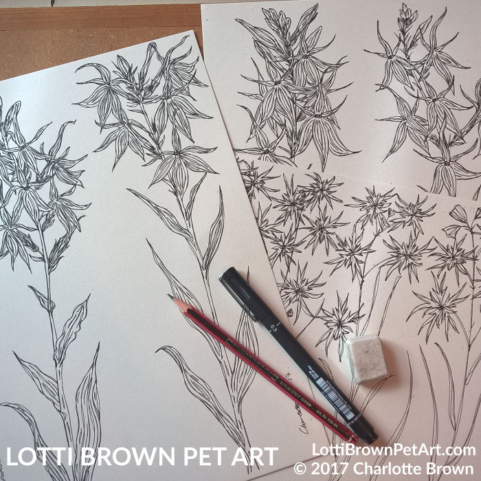 Starting to draw the Cardinal flowers
