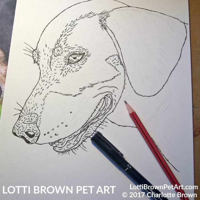 Starting my dachshund drawing