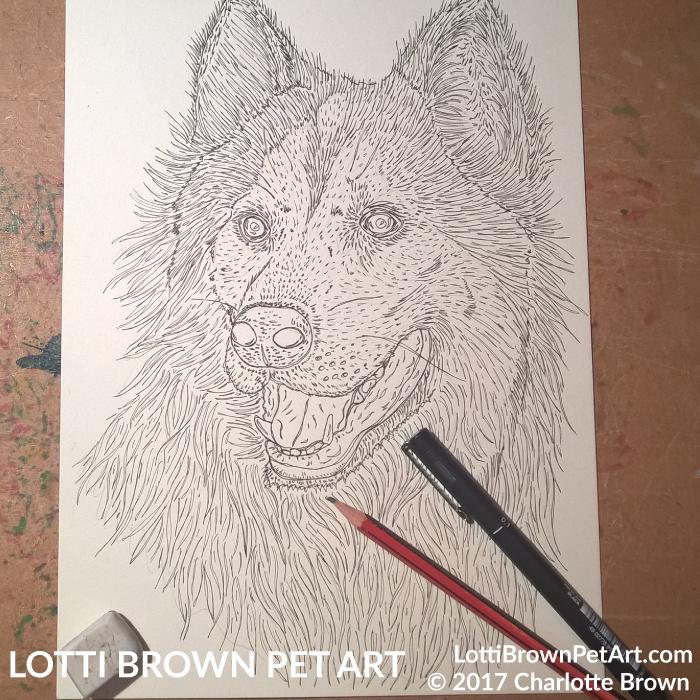 Starting my husky drawing
