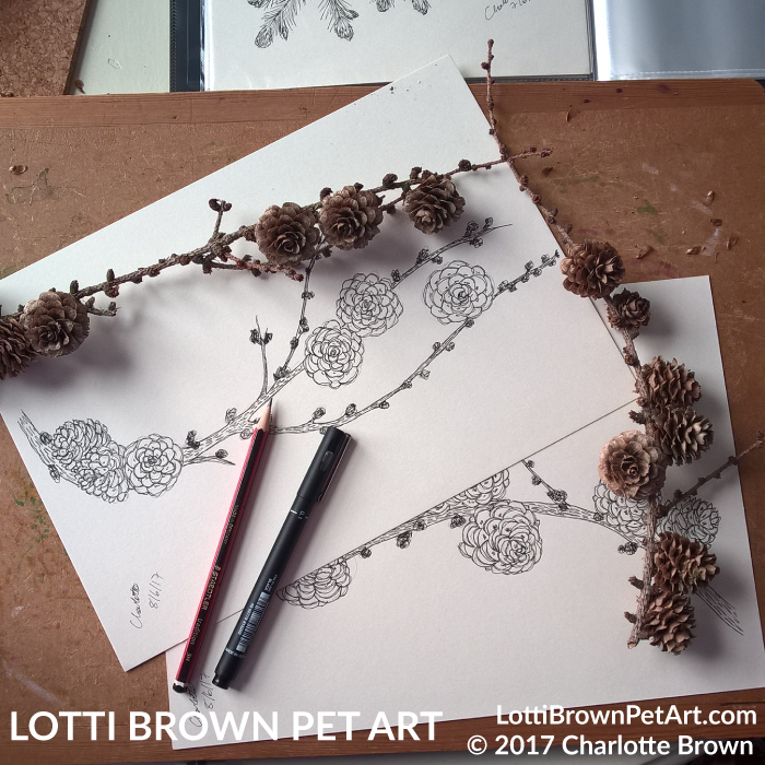 Drawing tiny fir cones from life