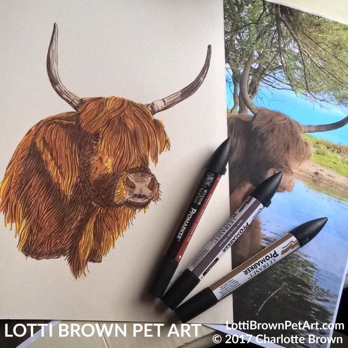 My highland cow drawing from Sally's photo