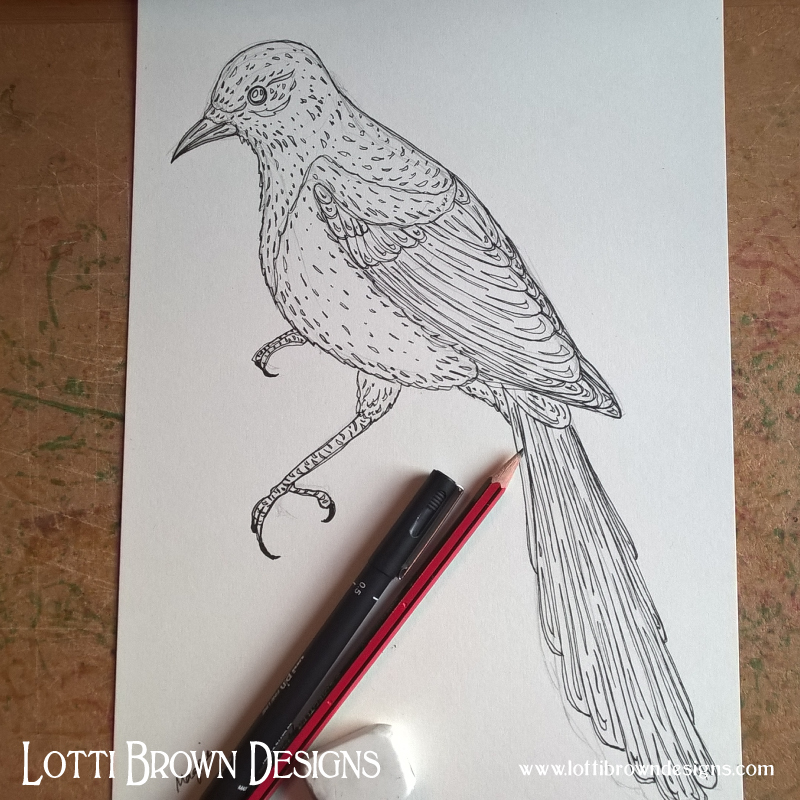 Magpie ink drawing