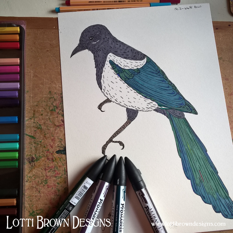Adding colour to the magpie